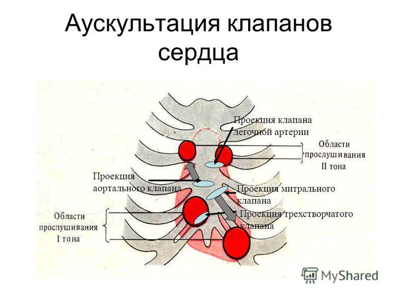 Аускультация клапанов сердца Проекция клапана легочной артерии Проекция трехстворчатого клапана Проекция митрального клапана Проекция аортального клапана
