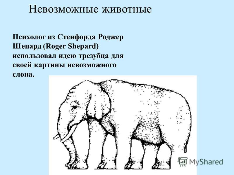 Невозможные животные Психолог из Стенфорда Роджер Шепард (Roger Shepard) использовал идею трезубца для своей картины невозможного слона.