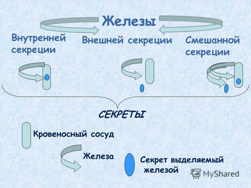 Железы Внутренней секреции Внешней секреции Смешанной секреции СЕКРЕТЫ Кровеносный сосуд Железа Секрет выделяемый железой