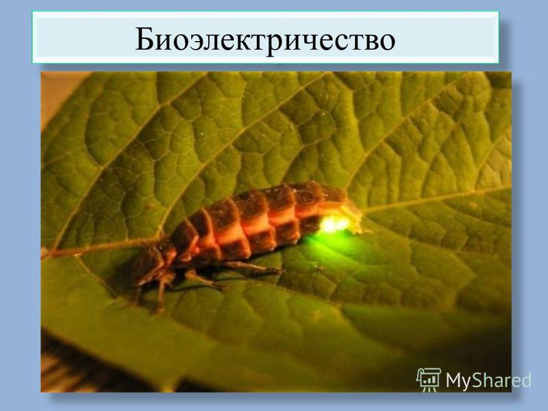 Биоэлектричество