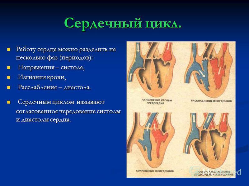 Сердечный цикл. Работу сердца можно разделить на несколько фаз (периодов): Работу сердца можно разделить на несколько фаз (периодов): Напряжения – систола, Напряжения – систола, Изгнания крови, Изгнания крови, Расслабление – диастола. Расслабление –