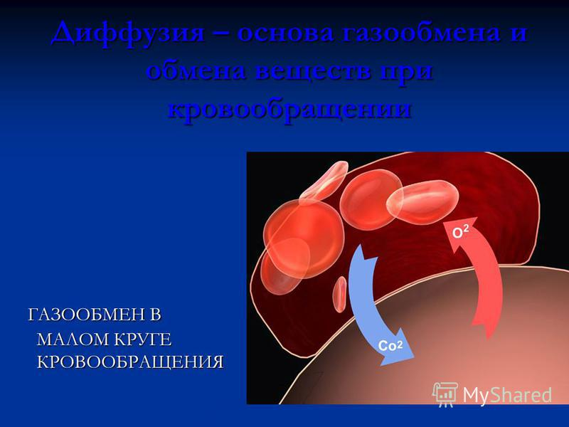 Диффузия – основа газообмена и обмена веществ при кровообращении ГАЗООБМЕН В МАЛОМ КРУГЕ КРОВООБРАЩЕНИЯ ГАЗООБМЕН В МАЛОМ КРУГЕ КРОВООБРАЩЕНИЯ