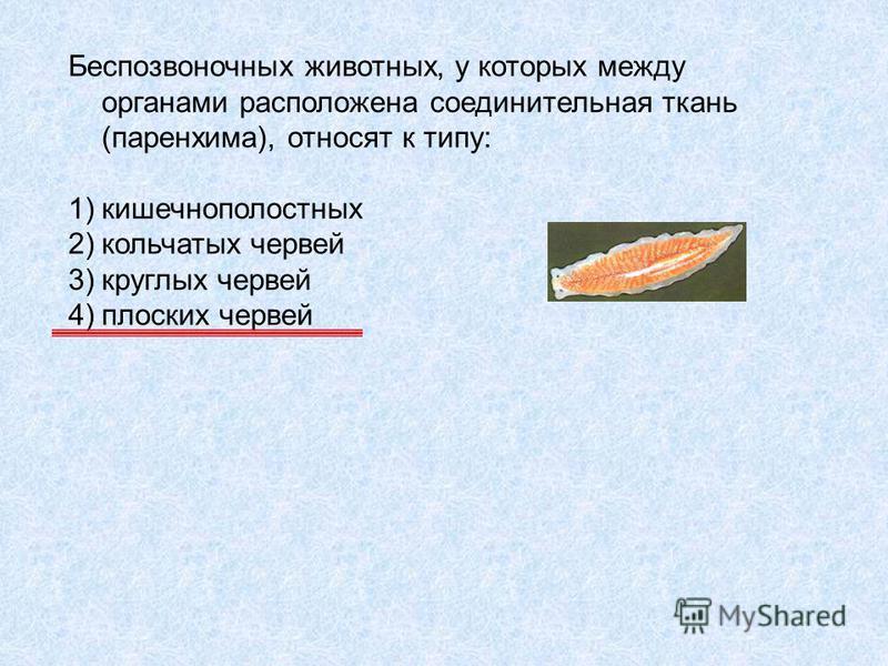 Беспозвоночных животных, у которых между органами расположена соединительная ткань (паренхима), относят к типу: 1)кишечнополостных 2)кольчатых червей 3)круглых червей 4)плоских червей