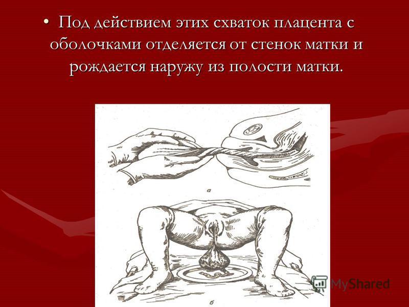 Под действием этих схваток плацента с оболочками отделяется от стенок матки и рождается наружу из полости матки.Под действием этих схваток плацента с оболочками отделяется от стенок матки и рождается наружу из полости матки.