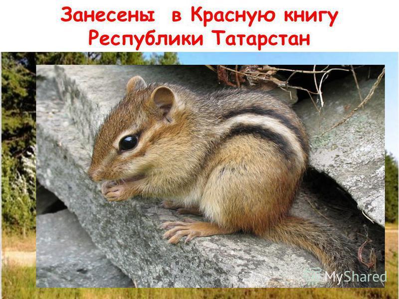 Занесены в Красную книгу Республики Татарстан