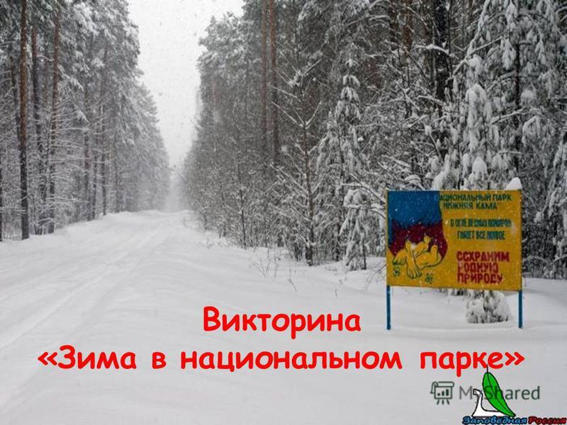 Викторина «Зима в национальном парке»