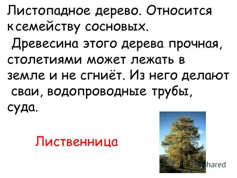 Листопадное дерево. Относится к семейству сосновых. Древесина этого дерева прочная, столетиями может лежать в земле и не сгниёт. Из него делают сваи, водопроводные трубы, суда. Лиственница