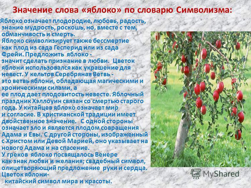 Значение слова «яблоко» по словарю Символизма: « Яблоко означает плодородие, любовь, радость, знание мудрость, роскошь, но, вместе с тем, обманчивость и смерть. Яблоко символизирует также бессмертие как плод из сада Гесперид или из сада Фрейи. Предло