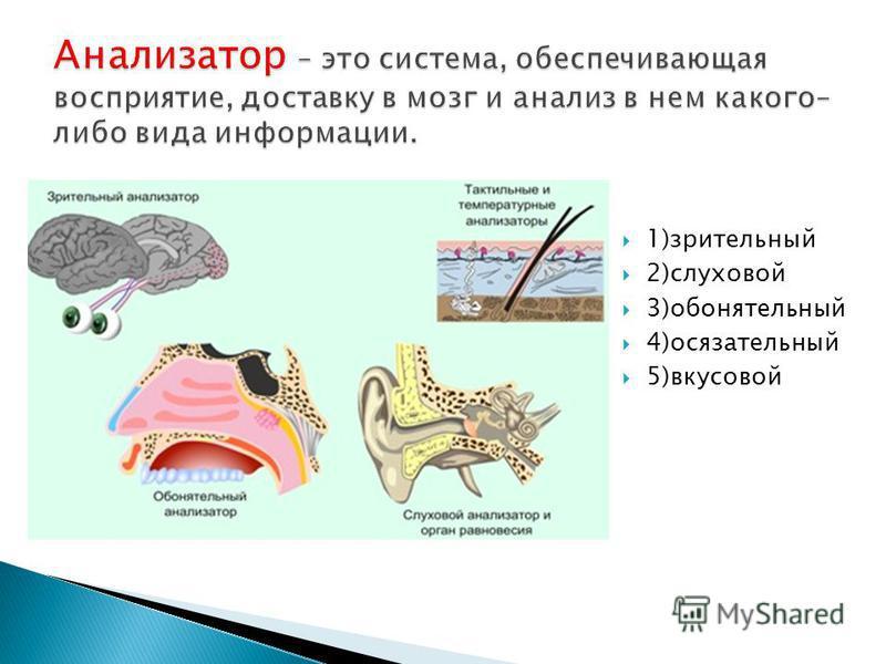1)зрительный 2)слуховой 3)обонятельный 4)осязательный 5)вкусовой