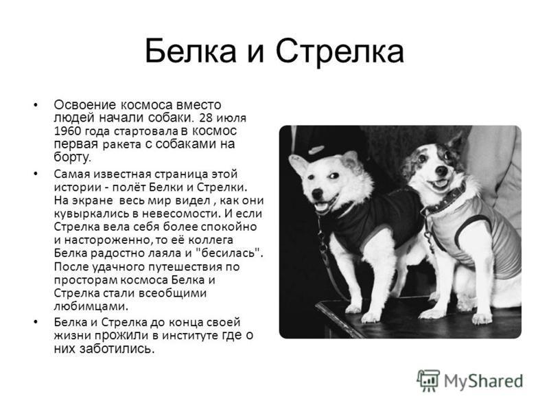 Белка и Стрелка Освоение космоса вместо людей начали собаки. 28 июля 1960 года стартовала в космос первая ракета с собаками на борту. Самая известная страница этой истории - полёт Белки и Стрелки. На экране весь мир видел, как они кувыркались в невес