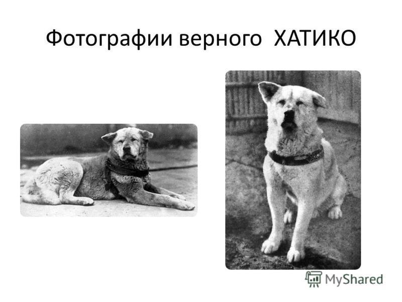 Фотографии верного ХАТИКО