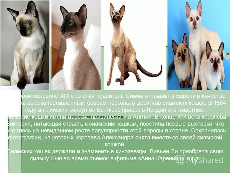 Во второй половине XIX столетия правитель Сиама отправил в Европу в качестве подарка высокопоставленным особам несколько десятков сиамских кошек. В 1884 году английский консул из Бангкока привез в Лондон это животное. Сиамские кошки имели царские при