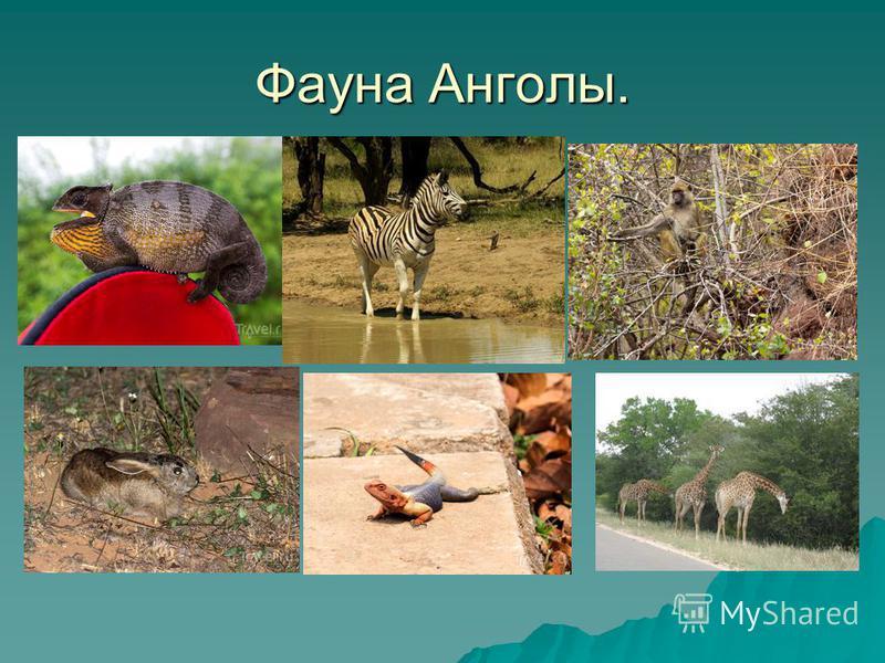 Фауна Анголы.