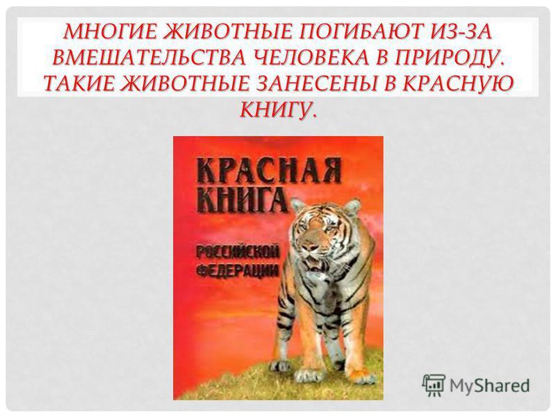 ТЕМА ПРЕЗЕНТАЦИИ «ЖИВОТНЫЕ КРАСНОЙ КНИГИ» Выполнила Онищенко Дария 6 «Б»