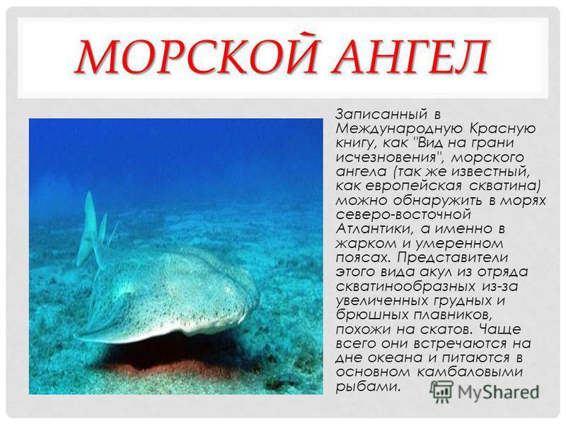 ХОБОТКОВАЯ СОБАЧКА ПЕТЕРСА В Международную Красную книгу этот редкий вид животных внесен как