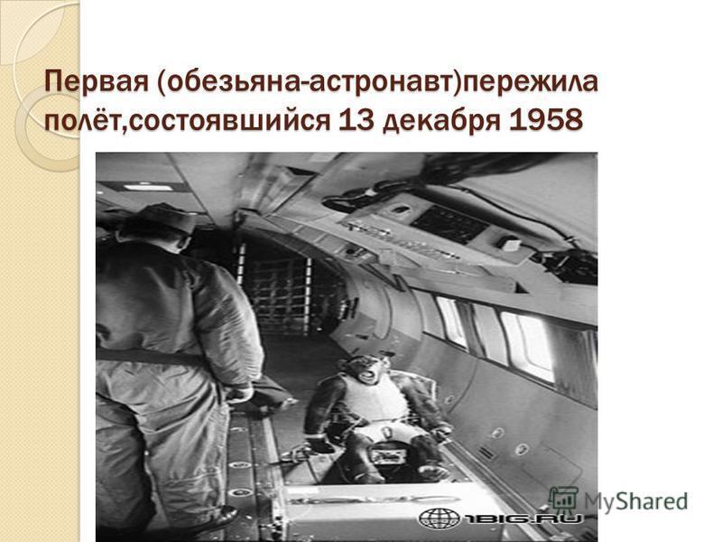 Животные побывавшие в космосе Кроме России космосом интересовались так же и американцы. Они так же использовали животных для испытания новой ракетной техники. В январе 1961 года американская обезьянка совершила успешный полёт на ракете «Рэд-Стоун». В