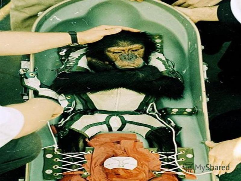 Первая (обезьяна-астронавт)пережила полёт,состоявшийся 13 декабря 1958