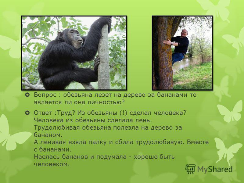 Вопрос : обезьяна лезет на дерево за бананами то является ли она личностью? Ответ :Труд? Из обезьяны (!) сделал человека? Человека из обезьяны сделала лень. Трудолюбивая обезьяна полезла на дерево за бананом. А ленивая взяла палку и сбила трудолюбиву