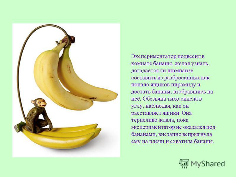 Экспериментатор подвесил в комнате бананы, желая узнать, догадается ли шимпанзе составить из разбросанных как попало ящиков пирамиду и достать бананы, взобравшись на неё. Обезьяна тихо сидела в углу, наблюдая, как он расставляет ящики. Она терпеливо