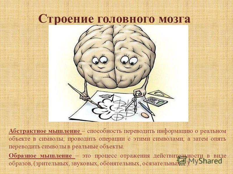 Строение головного мозга Абстрактное мышление – способность переводить информацию о реальном объекте в символы, проводить операции с этими символами, а затем опять переводить символы в реальные объекты. Образное мышление – это процесс отражения дейст