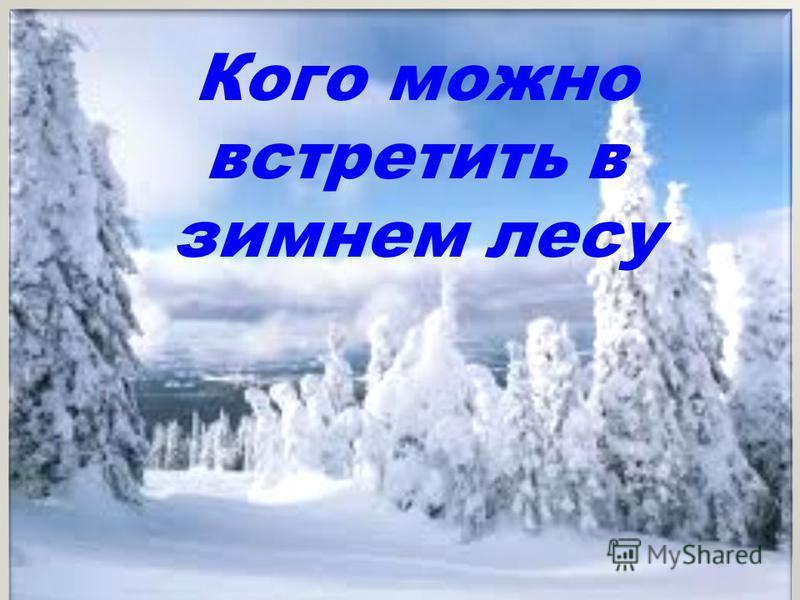 Кого можно встретить в зимнем лесу