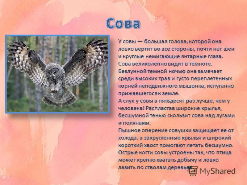 У совы большая голова, которой она ловко вертит во все стороны, почти нет шеи и круглые немигающие янтарные глаза. Сова великолепно видит в темноте. Безлунной темной ночью она замечает среди высоких трав и густо переплетенных корней неподвижного мышо