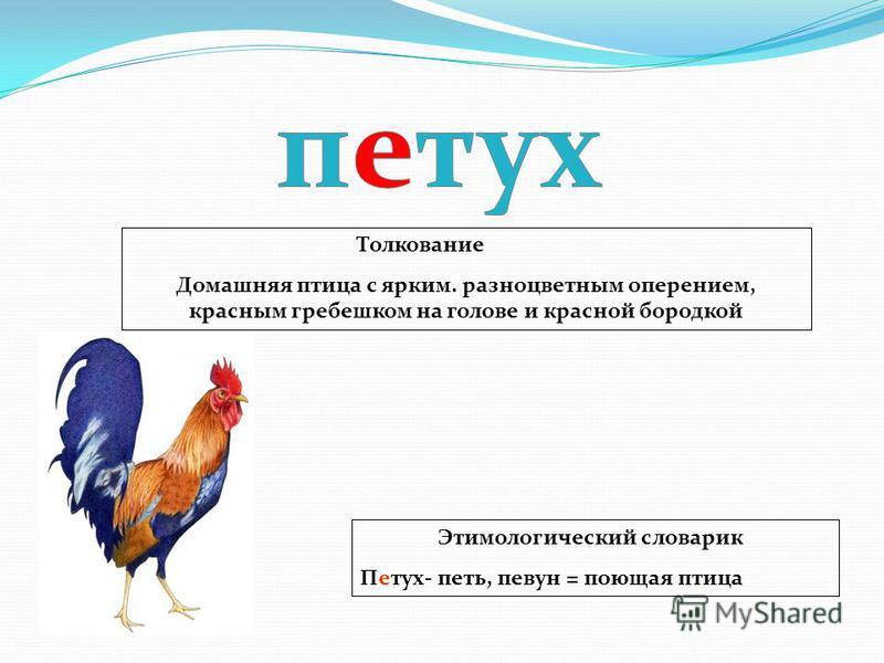 Этимологический словарик Петух- петь, певун = поющая птица Толкование Домашняя птица с ярким. разноцветным оперением, красным гребешком на голове и красной бородкой