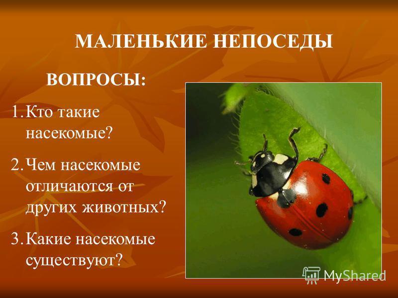 МАЛЕНЬКИЕ НЕПОСЕДЫ ВОПРОСЫ: 1. Кто такие насекомые? 2. Чем насекомые отличаются от других животных? 3. Какие насекомые существуют?