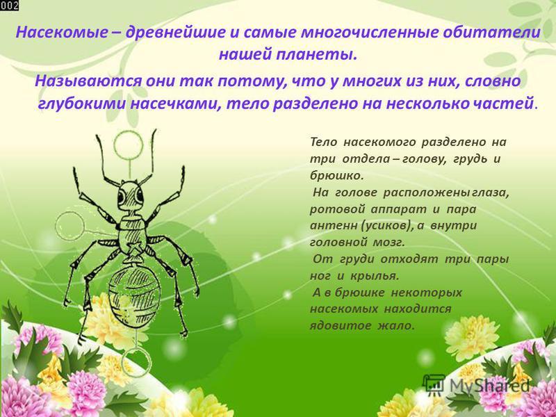 Насекомые – древнейшие и самые многочисленные обитатели нашей планеты. Называются они так потому, что у многих из них, словно глубокими насечками, тело разделено на несколько частей. Тело насекомого разделено на три отдела – голову, грудь и брюшко. Н
