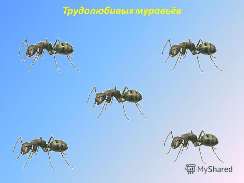 Трудолюбивых муравьёв