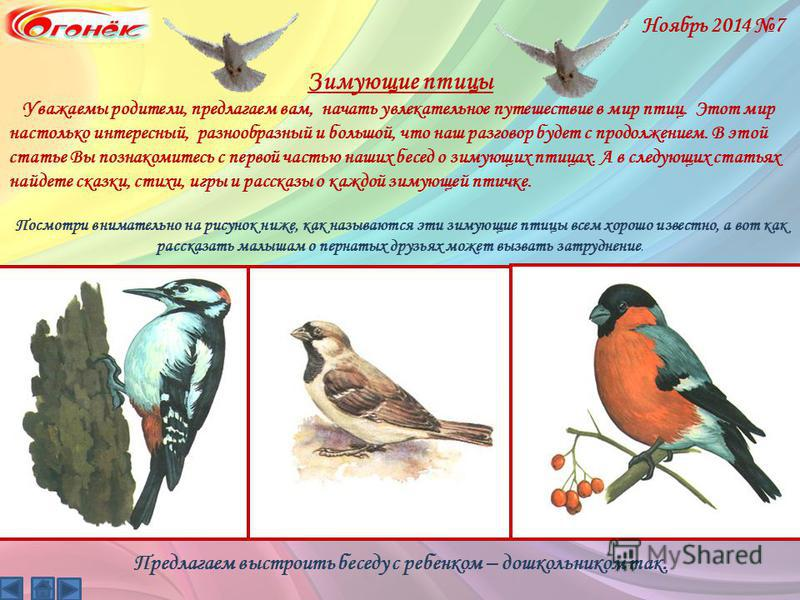 Зимующие птицы Уважаемы родители, предлагаем вам, начать увлекательное путешествие в мир птиц. Этот мир настолько интересный, разнообразный и большой, что наш разговор будет с продолжением. В этой статье Вы познакомитесь с первой частью наших бесед о