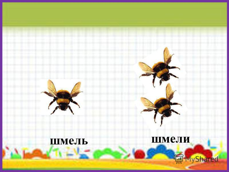 бабочка бабочки