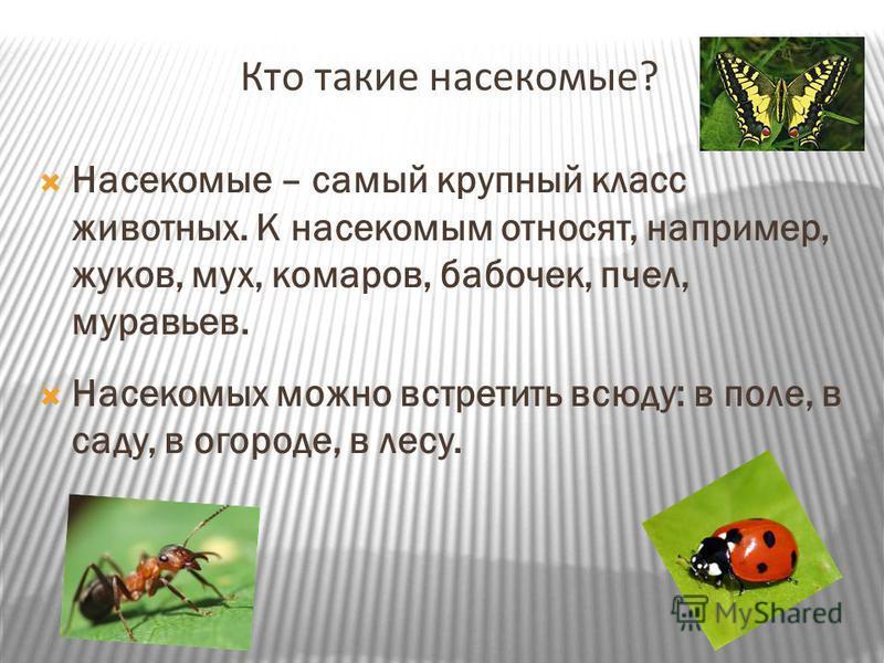 Кто такие насекомые? Насекомые – самый крупный класс животных. К насекомым относят, например, жуков, мух, комаров, бабочек, пчел, муравьев. Насекомых можно встретить всюду: в поле, в саду, в огороде, в лесу.