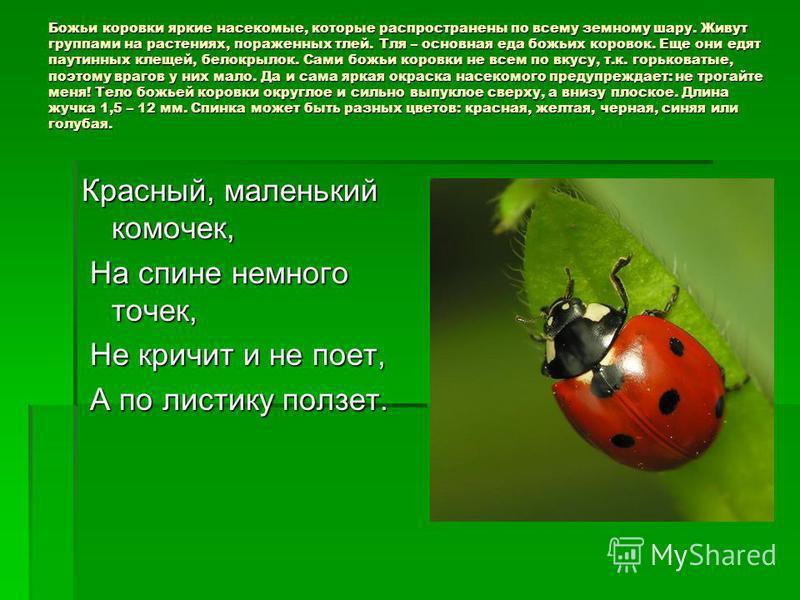 Божьи коровки яркие насекомые, которые распространены по всему земному шару. Живут группами на растениях, пораженных тлей. Тля – основная еда божьих коровок. Еще они едят паутинных клещей, белокрылок. Сами божьи коровки не всем по вкусу, т.к. горьков