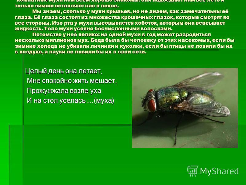 Комнатные мухи нам всем хорошо знакомы: они надоедают нам всё лето и только зимою оставляют нас в покое. Мы знаем, сколько у мухи крыльев, но не знаем, как замечательны её глаза. Её глаза состоят из множества крошечных глазок, которые смотрят во все