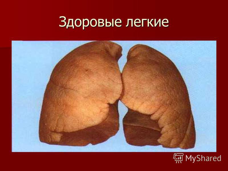 Никотин – один из самых опасных ядов растительного происхождения.