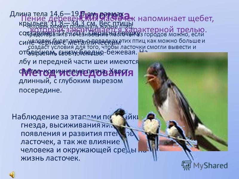 Гипотеза. Человек может помешать жизни птиц. Предотвратить исчезновение ласточек из городов можно, если человек будет знать о повадках этих птиц как можно больше и создаст условия для того, чтобы ласточки смогли вывести и вырастить своё потомство. Ме
