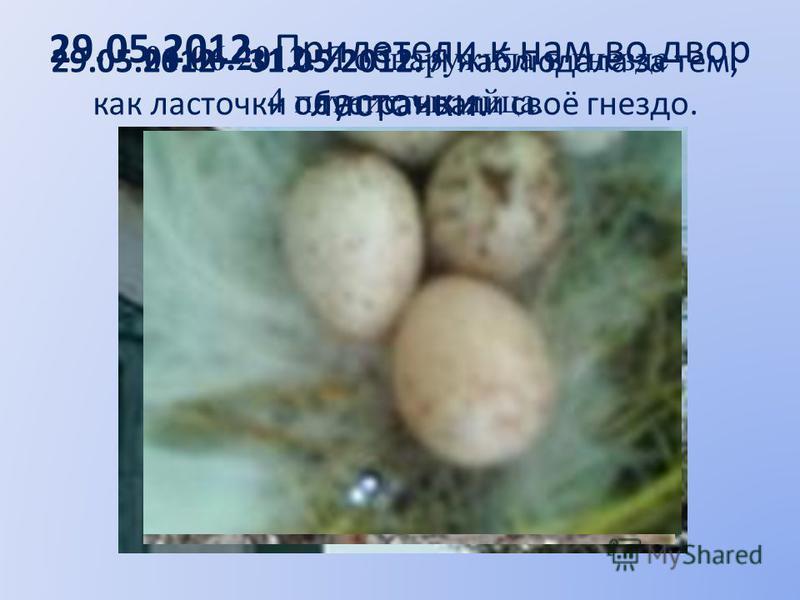 29.05.2012. Прилетели к нам во двор ласточки. 29.05.2012 – 31.05.2012. Я наблюдала за тем, как ласточки обустраивали своё гнездо. 01.06.2012. Я обнаружила в гнезде 4 пятнистых яйца.