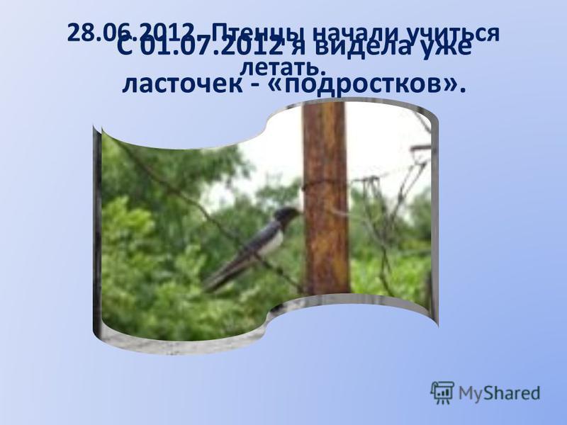 28.06.2012. Птенцы начали учиться летать. С 01.07.2012 я видела уже ласточек - «подростков».