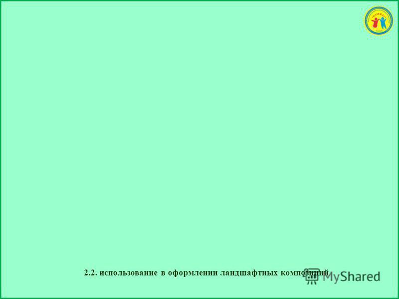 2.2. использование в оформлении ландшафтных композиций