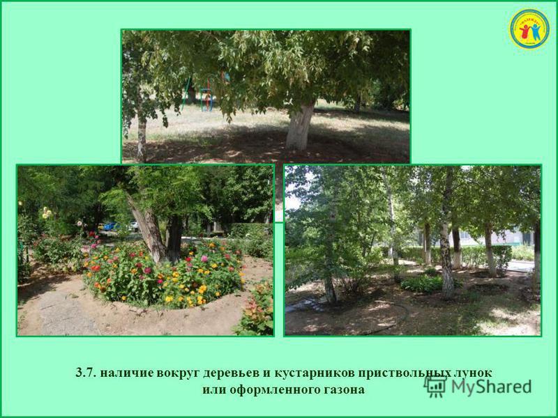 3.7. наличие вокруг деревьев и кустарников приствольных лунок или оформленного газона