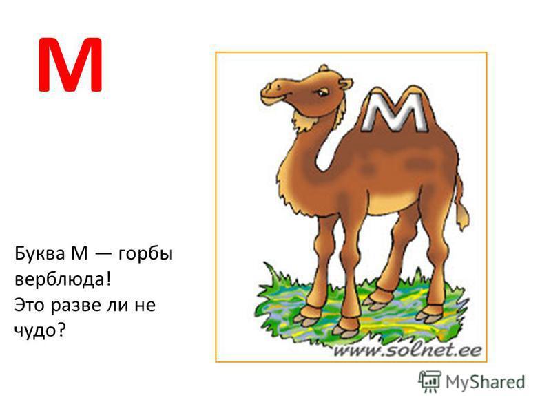 М Буква М горбы верблюда! Это разве ли не чудо?