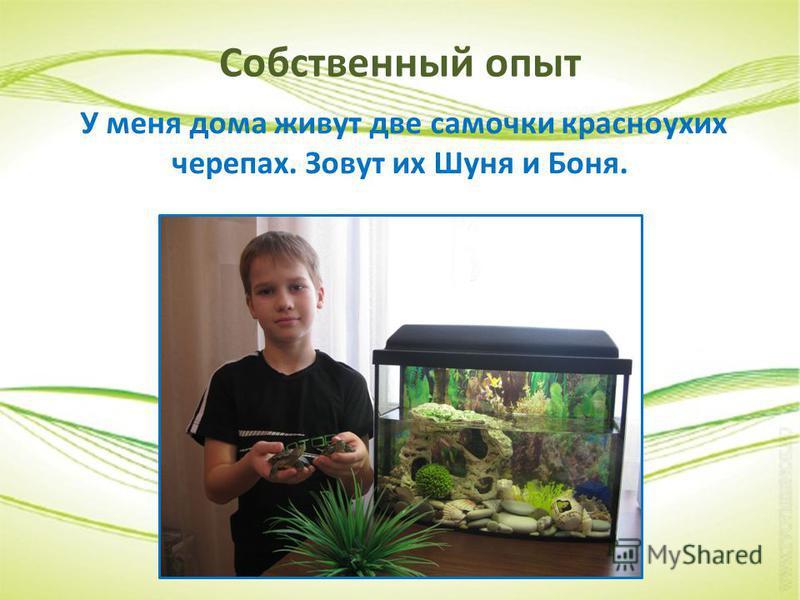 Собственный опыт У меня дома живут две самочки красноухих черепах. Зовут их Шуня и Боня.
