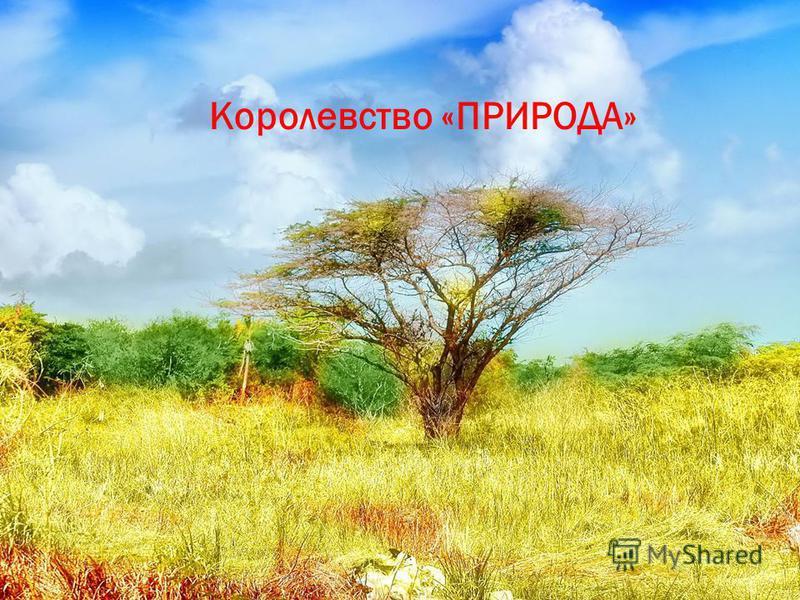 Королевство «ПРИРОДА»