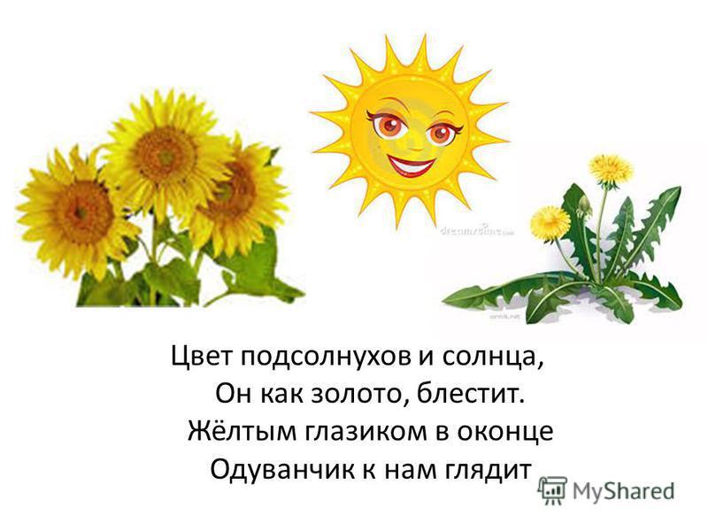 Цвет подсолнухов и солнца, Он как золото, блестит. Жёлтым глазиком в оконце Одуванчик к нам глядит