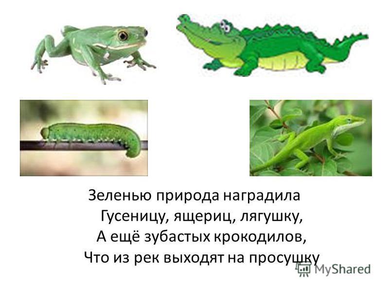 Зеленью природа наградила Гусеницу, ящериц, лягушку, А ещё зубастых крокодилов, Что из рек выходят на просушку