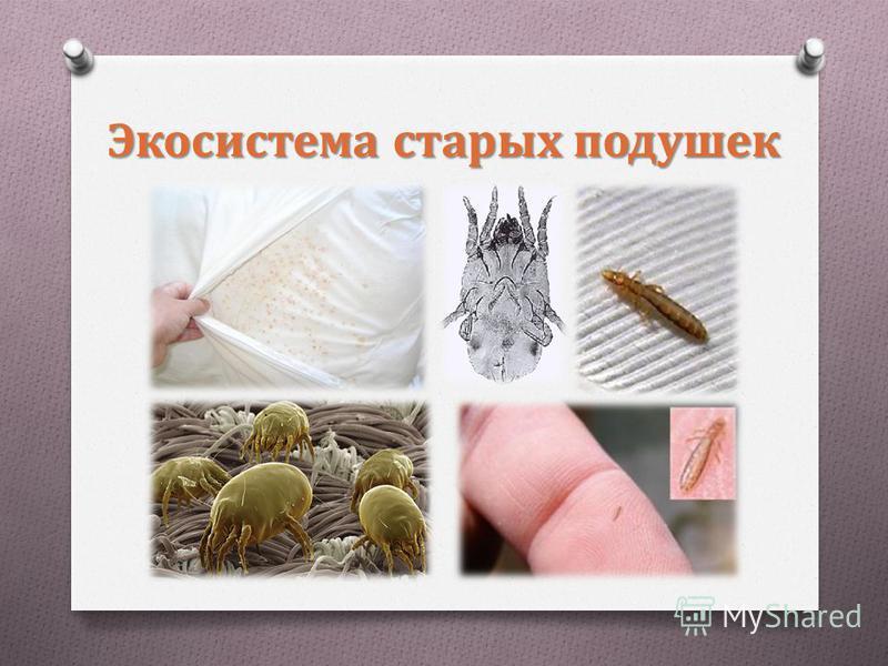 Экосистема старых подушек