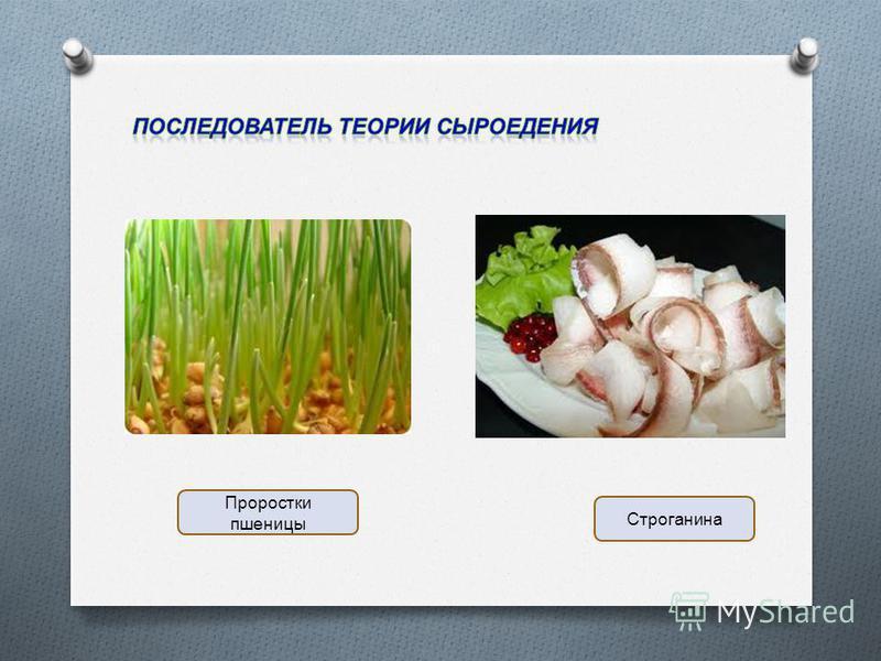 Проростки пшеницы Строганина