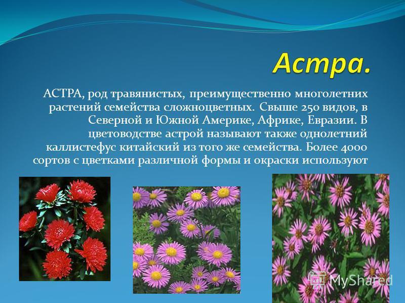 АСТРА, род травянистых, преимущественно многолетних растений семейства сложноцветных. Свыше 250 видов, в Северной и Южной Америке, Африке, Евразии. В цветоводстве астрой называют также однолетний каллистефус китайский из того же семейства. Более 4000