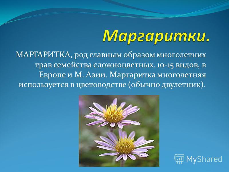 МАРГАРИТКА, род главным образом многолетних трав семейства сложноцветных. 10-15 видов, в Европе и М. Азии. Маргаритка многолетняя используется в цветоводстве (обычно двухлетник).